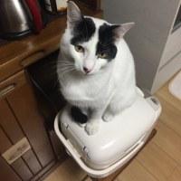 くーさん、炊飯器にのる