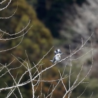 野鳥保護?自然破壊?