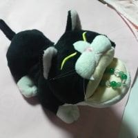 猫のメガネケース