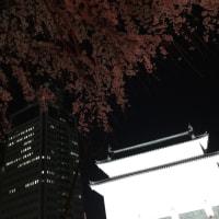 夜桜 桜満喫 うっとり満開桜鑑賞♡ 静岡市葵区 駿府城公園周辺にて