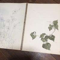 母のスケッチブック