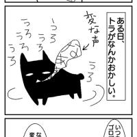 猫はよく宙を見るけど。。