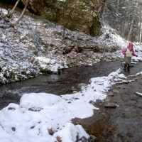 初冬のニジマス渓流釣り