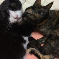 舐め合う兄妹