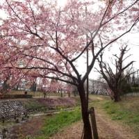 初春の小川