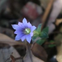 エネルシアさんのアカデメイア、春の開園
