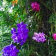 咲くやこの花館