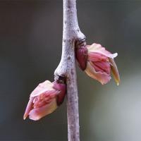 25日の京都府立植物園から ( 春だより )