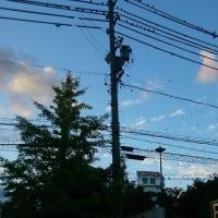 鳥の群れ・・・・