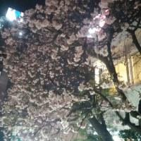 近くの夜桜