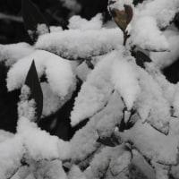 降雪 2017/1/21