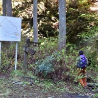 埼玉県飯能市「蕨山」(わらびやま)周回ハイキング、その1