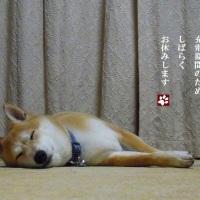 お休みします。