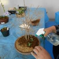 雑木を使って「春の風景」を   3月例会