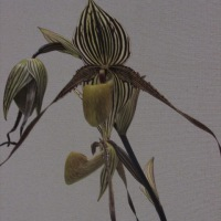 ラン展での蘭の花