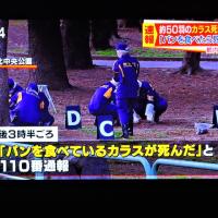 3/25 昨日投稿したカラスの大量殺害のニュース