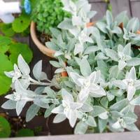 ララさん 庭の花