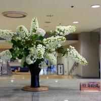 ・町田市民ホール・ロビー展示(紫陽花)
