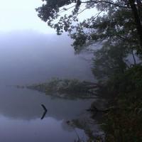 ~~~   墨絵の世界・・・・・霧の朝  ~~~