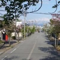 護国神社と散歩