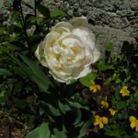 花の季節:植物の世界を覗く(含む追記)