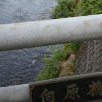 江の川漁協水系神野瀬川