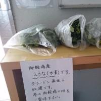 【ラストの水菜】今シーズン最後の御殿場の味覚