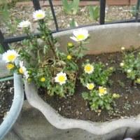 我が家の庭が賑やかになってきました!
