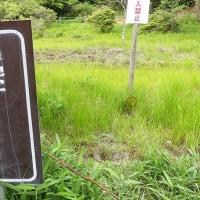 今年初 ヒイゴ池湿地