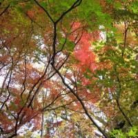 紅葉狩り、食事会、我が家の植物の事など