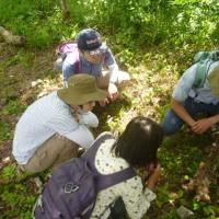 「雑木林のきのこプログラム①キノコを知る、見つける」