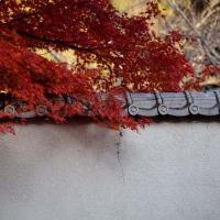 白塀と紅葉
