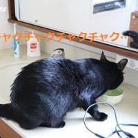 たかしまトマト第4弾!&洗面台のお掃除だけで終わらないわ~
