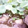 下野国分寺万葉植物園