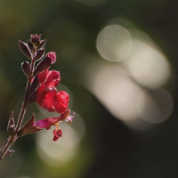 畑の片隅に咲く