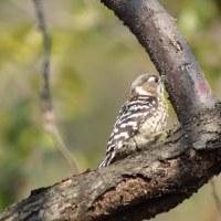wild bird 4