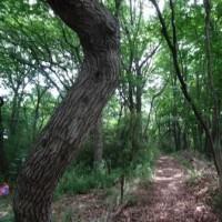 絵本シアター「森でおはなし」