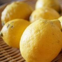 尾道レモンを使って・・・
