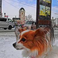 イヌの散歩道~初冬編