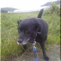 犬が散歩以外は休んでいるのは体力温存のためなのだ