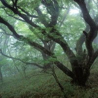 梅雨の森2
