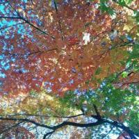 まだまだ秋