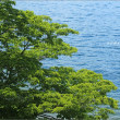 癒しの風景・初夏の中禅寺湖 ②