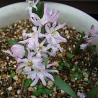 旬の花アラカルト