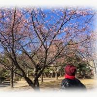 イマイチの河津桜