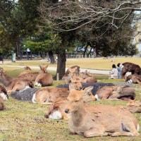 奈良公園に行ってきました