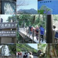 屋久島 - 世界自然遺産
