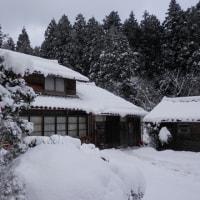 そろそろいいかな 今年のカメムシ積雪予報も当たり!
