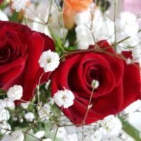 薔薇が好きでも薔薇と漢字で書けない