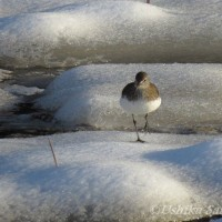 アーカイブ「雪の散歩道にて」-15